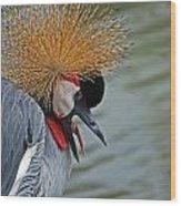 Crowned Crane Wood Print by Skip Willits