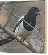 Crying Magpie Wood Print