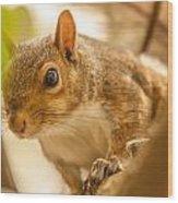 Curious Squirrel Wood Print