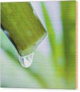 Cut Aloe Vera Leaf Wood Print