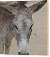 Cute Donkey Wood Print