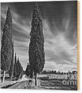 Cypress Trees- Tuscany Wood Print