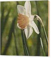 Daffodil Wood Print