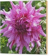 Dahlia Named Annette C Wood Print