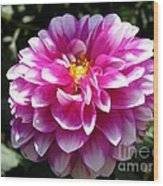 Dahlia Named Brian Ray Wood Print