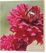 Dahlia Named Caproz Jerry Garcia Wood Print