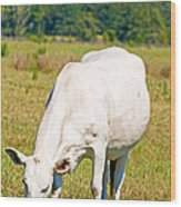 Dairy Cow Wood Print