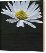 Daisy 1 Wood Print