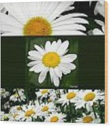 Daisy Collage Wood Print
