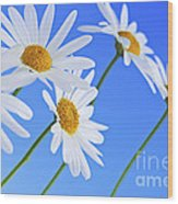 Daisy Flowers On Blue Background Wood Print