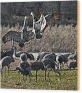 Dance Of The Cranes Wood Print