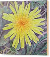 Dandelion Wood Print by Linda Pope