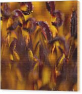 Bordeaux Red Stamens Wood Print