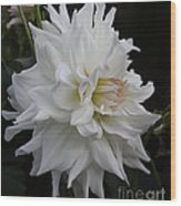 Darling Dahlia Wood Print