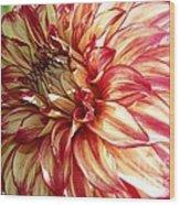 Dazzling Dahlia  Wood Print