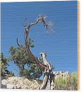 Dead Tree At Grand Canyon Wood Print