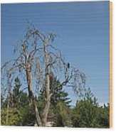 Dead Tree With Crow Wood Print