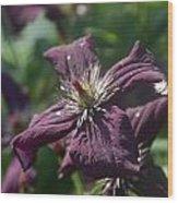 Deep Purple Clematis Wood Print