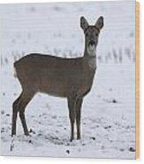 Deer In The Snow Netherlands Wood Print