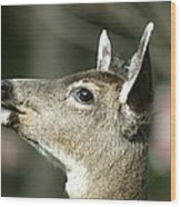 Deer Sunshine Profile Wood Print