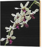 Dendrobium 'lloyd Stainton'. Wood Print