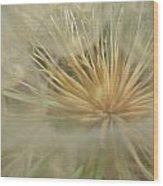 Desert Dandelion 6 Wood Print