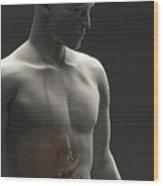 Digestive System Male Wood Print