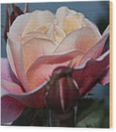 Distant Drum Rose Bloom Wood Print