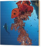 Diver Looks On At A Bright Red Soft Wood Print