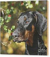 Dobermann Dog Wood Print