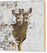 Doe Mule Deer In Snow Wood Print