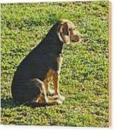 Dogs Wood Print