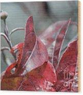 Dogwood  Autumn Wood Print
