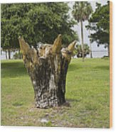 Dolphin Tree In Melbourne Beach Florida Wood Print