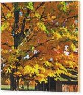 Door County Yellow Maple Migrant Shack Wood Print