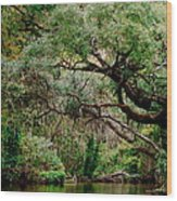 Dora Canal Tavares Florida Wood Print