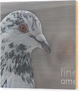 Dove Pigeon Wood Print