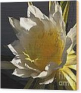 Dragon Fruit Blossom In Profile Wood Print
