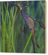 Dragon Seahorse Wood Print