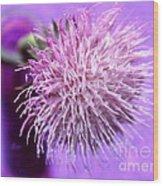 Dream In Violet Wood Print
