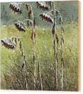 Dried Up Sunflower Patch Wood Print
