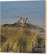 Driftwood In Beach Grass Wood Print