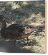 Duck - Animal - 011312 Wood Print
