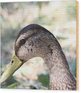 Duck - Animal - 011314 Wood Print by DC Photographer