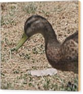 Duck - Animal - 011315 Wood Print