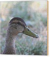 Duck - Animal - 01134 Wood Print