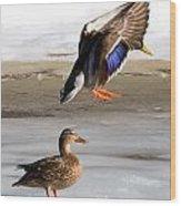 Ducking Around Wood Print