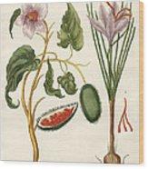 Dye Plants Wood Print