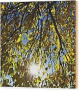 Early Autumn  Wood Print