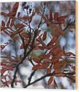 Early Fall Of Rowan Wood Print